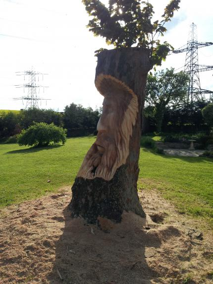Tree Spirit, Sycamore
