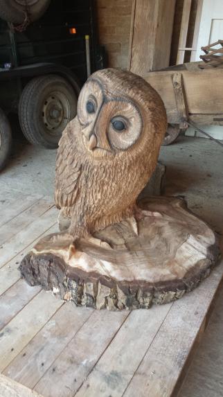 Tawney Owl, Walnut