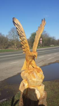 Landing Falcon, Leyland Cypress