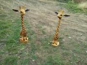 Pair of Giraffes, leyland cypress.