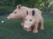 Wild Boars, Western Red Cedar