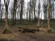 The three totms in the clearing. Ox Lodge Woods.